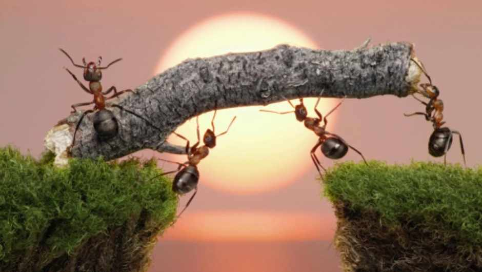 Do ants have feelings?