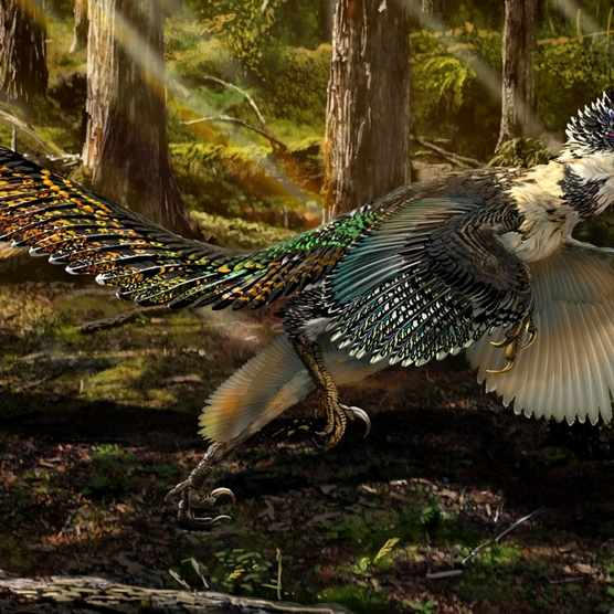 Zhenyuanlong was discovered in the Liaoning region of China and its fossilised remains suggest that this dinosaur was covered in feathers © Chuang Zhao