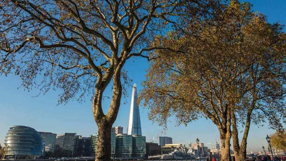 Do London plane trees actually absorb pollution into their bark? © Alamy