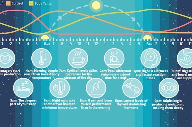 How do circadian rhythms work?