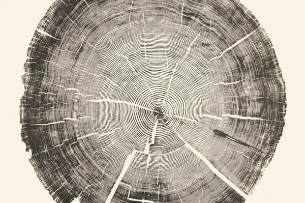 Print taken from the crosscut of a retired telephone pole in 2011 © Courtesy of Gina Kiss. From Bryan Nash Gill, Woodcut (New York: Princeton Architectural Press, 2012)