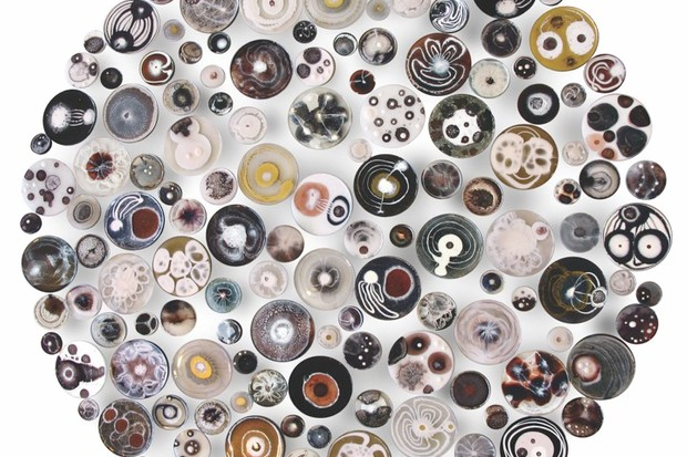 Installation of 150 painted petri dishes, depicting electron-microscope images of viruses, viscera, and pharmaceuticals reacting with the human body © Klari Reis