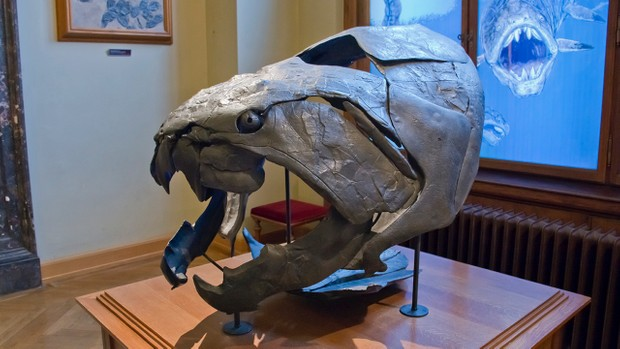 Dunkleosteus Par Zachi Evenor d'Israël (Dunkleosteus), CC BY 3.0 ou CC BY 2.0, via Wikimedia Commons