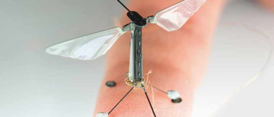 The tiny RoboBee uses electrostatic adhesion to perch on surfaces, allowing it to save energy © Wyss Institute