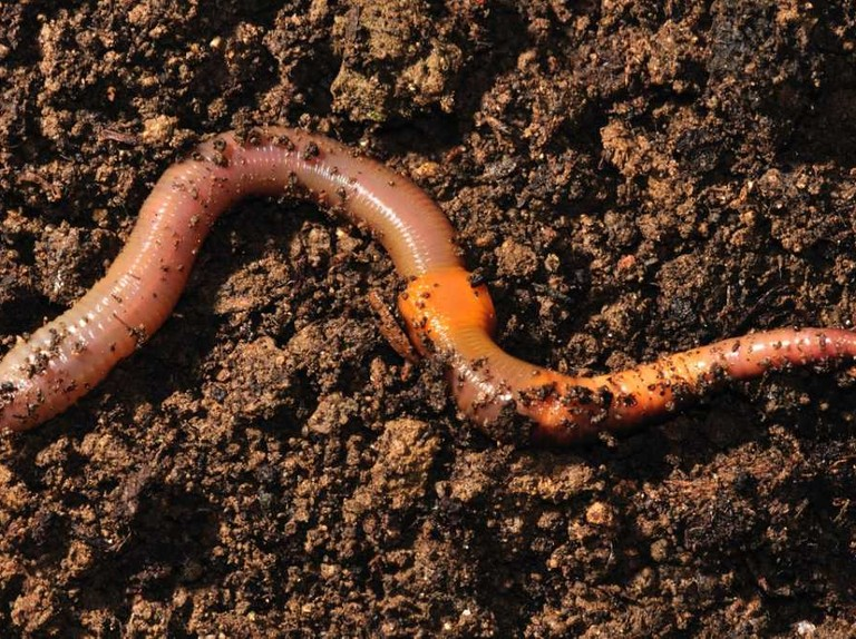 Can a worm cut in half sense anything? - BBC Science Focus Magazine