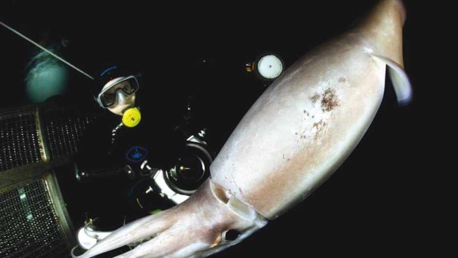 How do squid survive extreme water pressure in the deep sea? © Getty Images