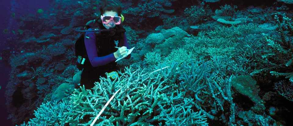 Can coral reefs recover from bleaching? © Getty Images