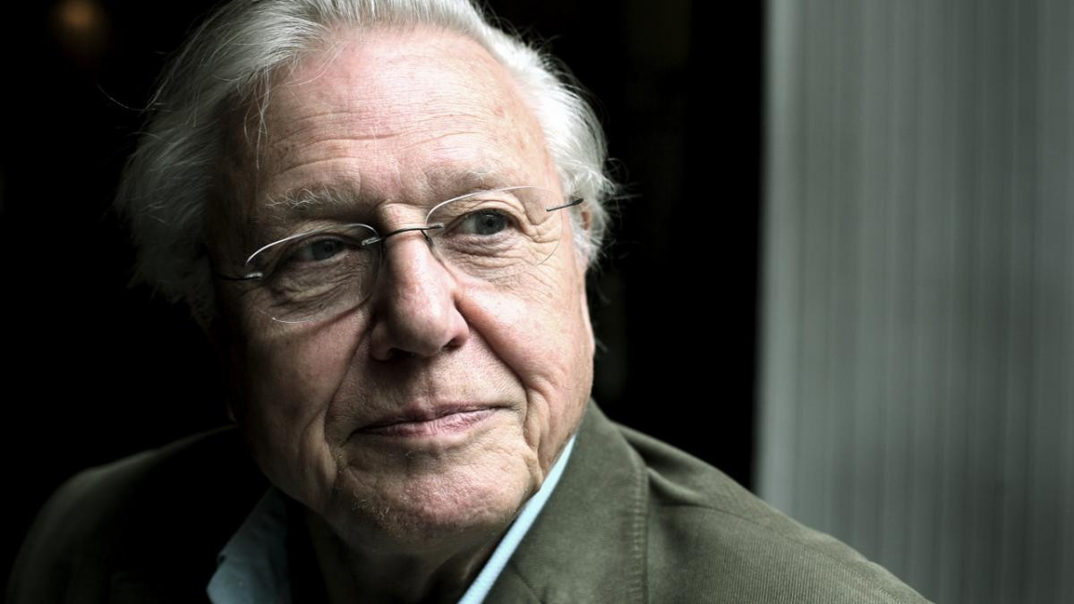 David Attenborough (© Martin Godwin/Getty Images)