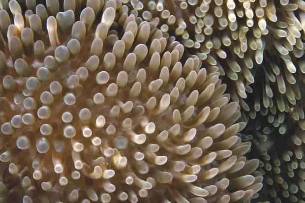 Sea anemones © Getty