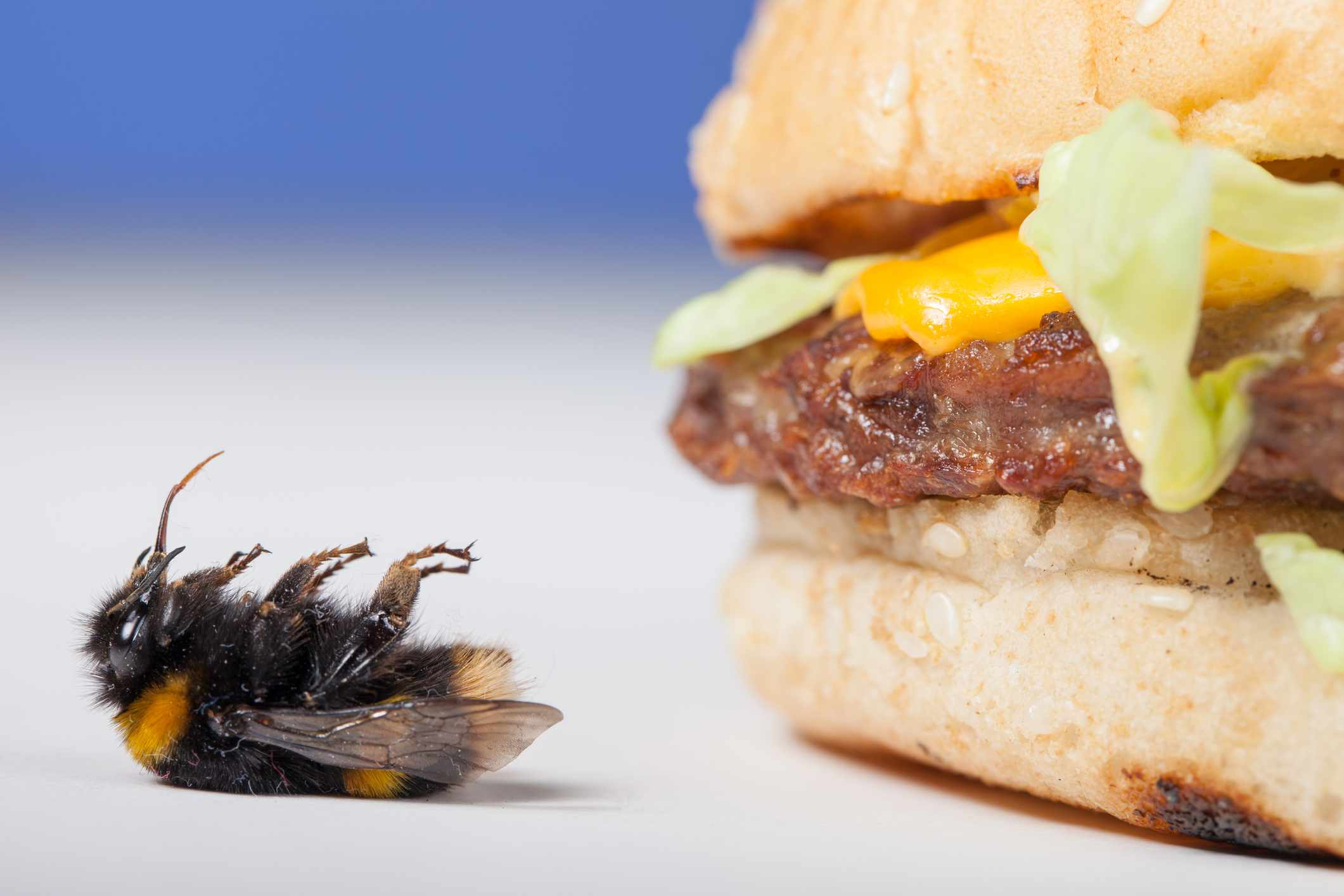 Dead bee lying next to a burger © Getty Images