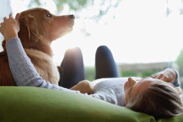 Is stroking good for pets? © Getty Images