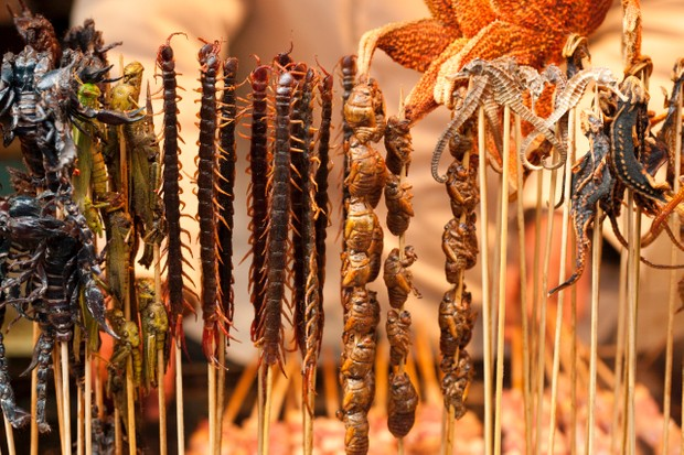 Various cooked insects thread on skewers in a market in Beijing, China © BJI/Blue Jean Images