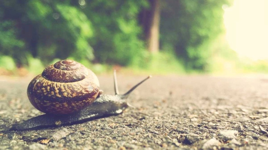 Can snails go backwards? © Getty Images