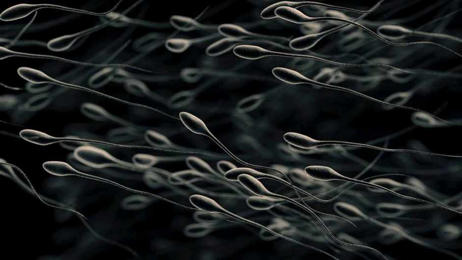 Are sperm alive? © Getty Images