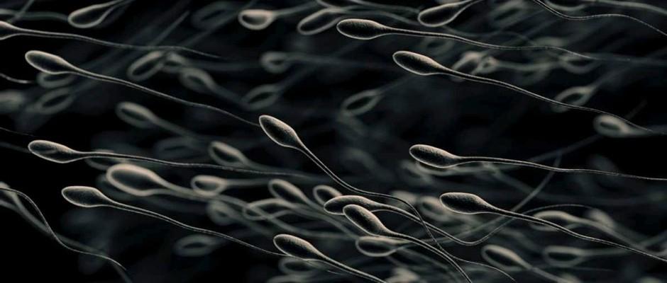 Keeping sperm alive