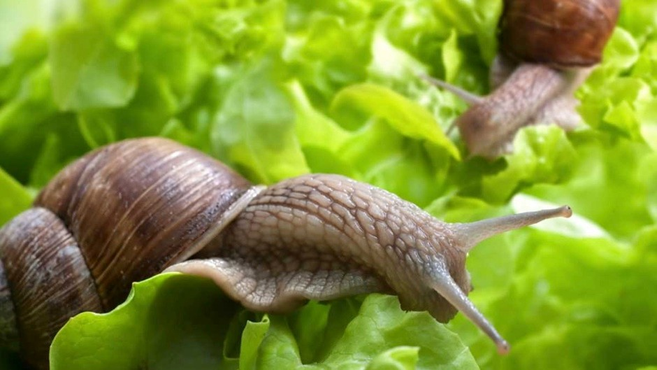 Are snails born with their shells? © Getty Images