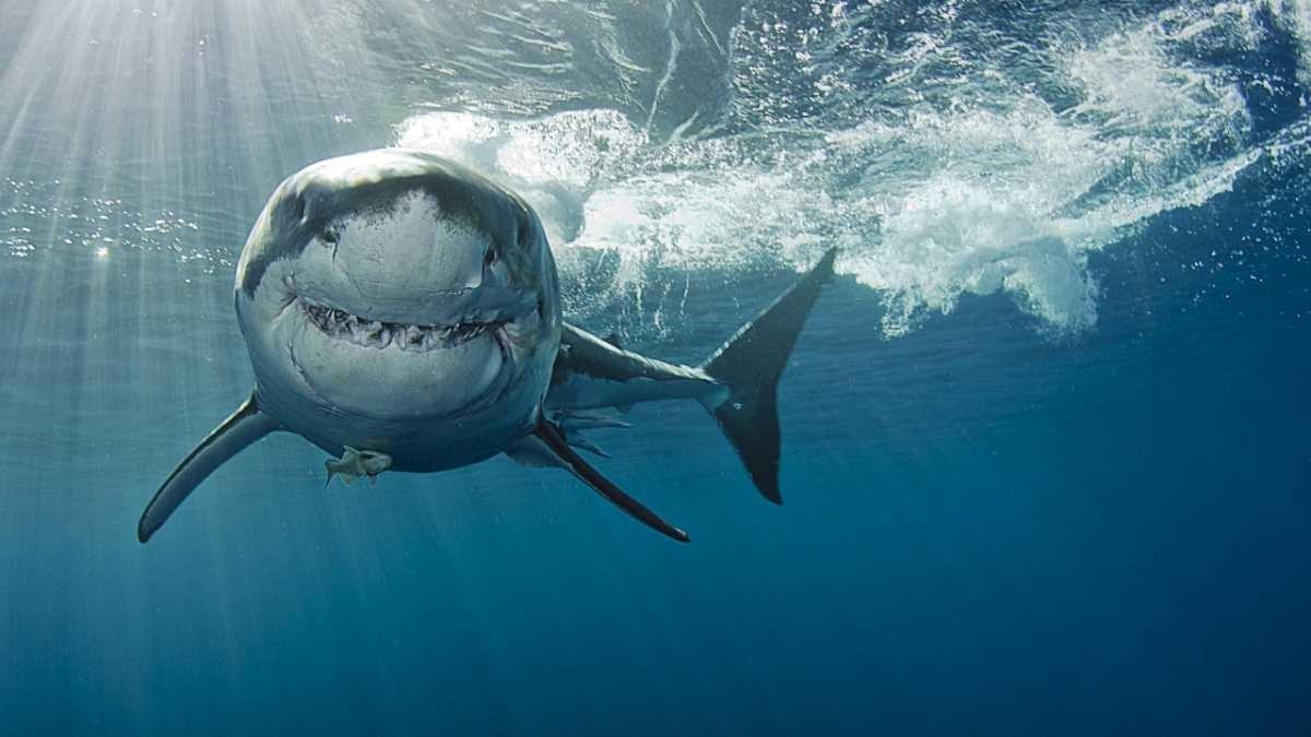 Amazing animal super senses © Getty Images