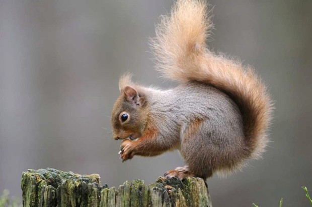 How do squirrels find buried nuts? © Getty Images