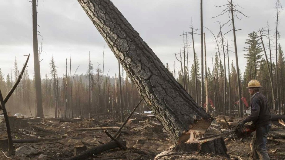 What would happen if all the trees were cut down?