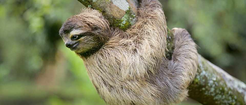 the power of sloth six reasons why this lazy animal is perfectly