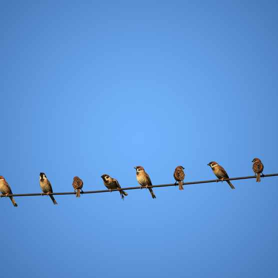 Why don't birds get electrocuted while perching on power lines? © Getty Images