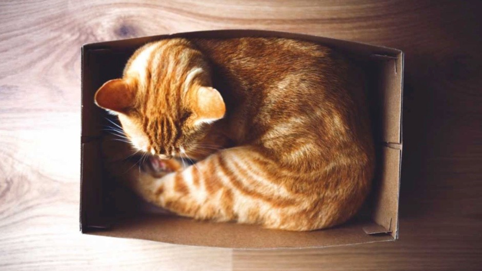 Why do cats like small spaces? © Getty Images