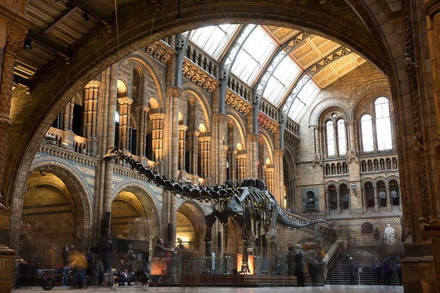 Members of the public walk walk around 'Dippy' the Diplodocus at Natural History Museum on January 4, 2017 in London, England. The 70ft long (21.3m) plaster-cast sauropod replica, which is made up of 292 bones, is set to leave the Natural History Museum in London, where it has been for 109 years, before going on a national tour. Dippy will be replaced by an 83 foot long real skeleton of a Blue Whale, which will be hung from the ceiling. (Photo by Dan Kitwood/Getty Images)