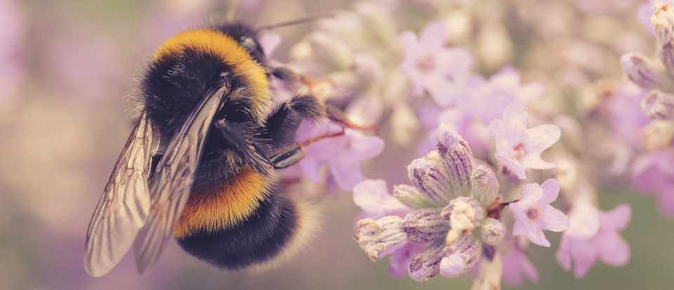 Five fascinating facts about bees