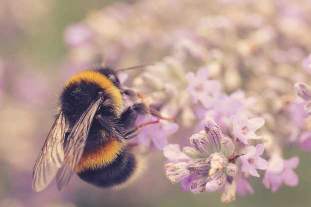 Why do bees buzz? © Getty Images