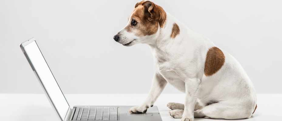 Why can I not talk to my dog over Skype? © Getty Images