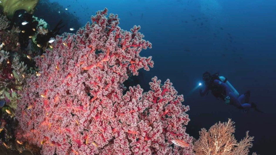 How deep can coral live? © Getty Images