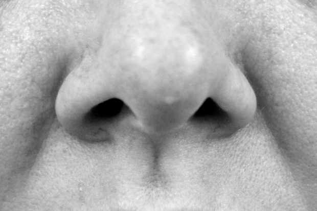 If we only have one trachea, why do we have two nostrils? © Getty Images