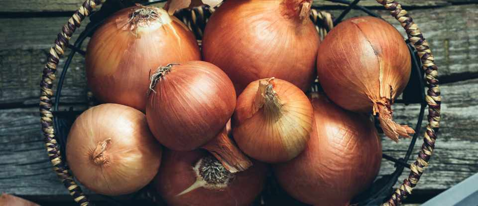 Artificial muscles created from onions © Getty Images