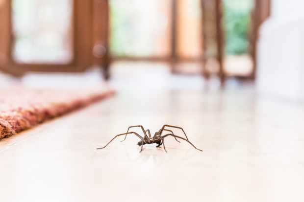 Why are spiders scary? © Getty Images