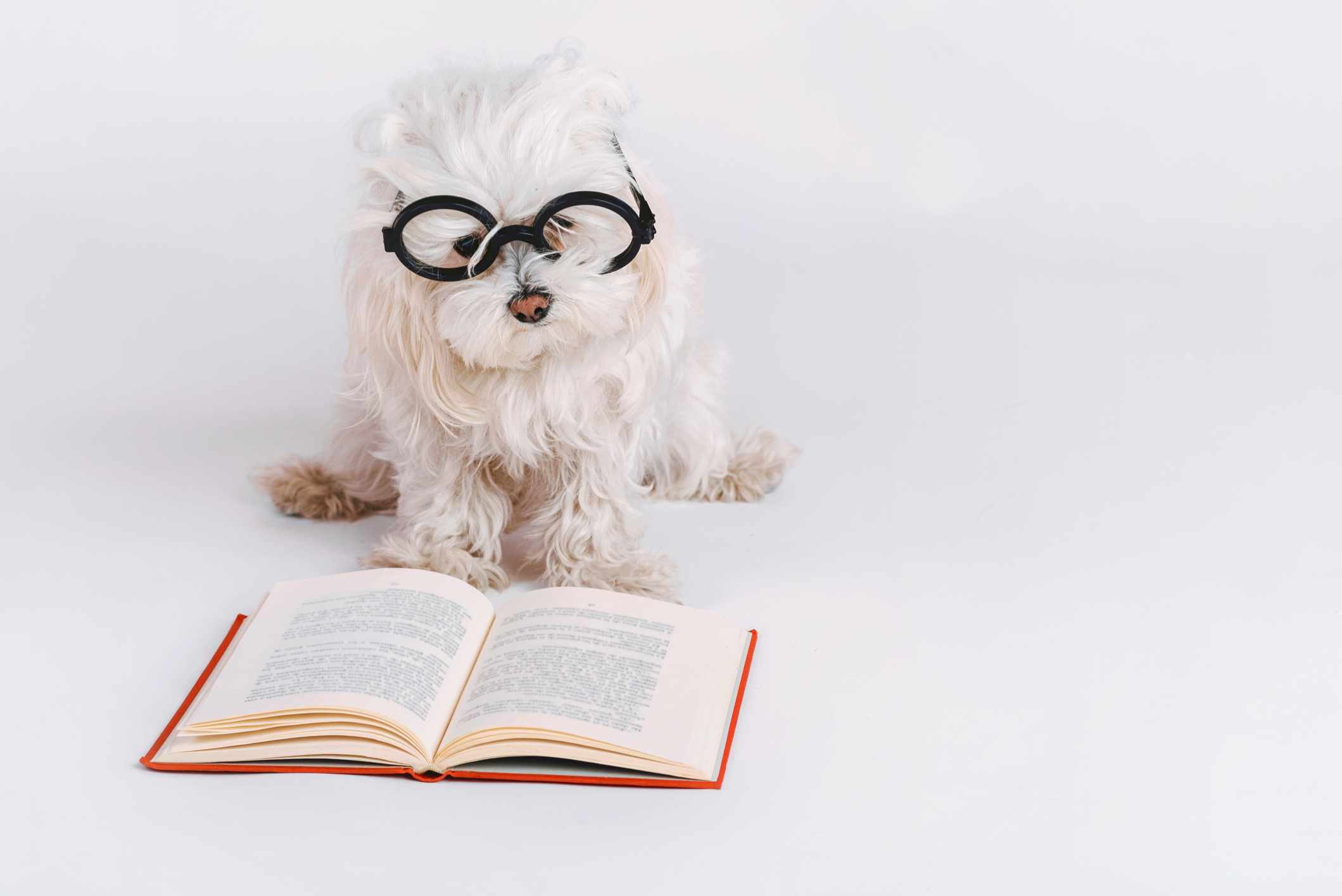 Top 10: What are the most intelligent dog breeds? © Getty Images
