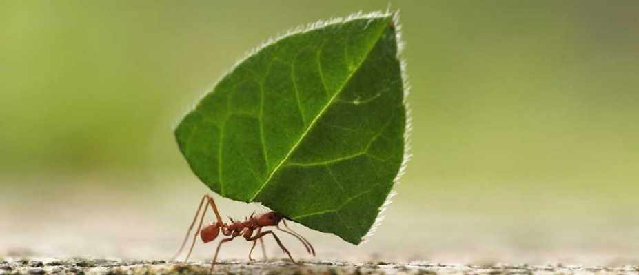 How strong are ants? © Getty Images