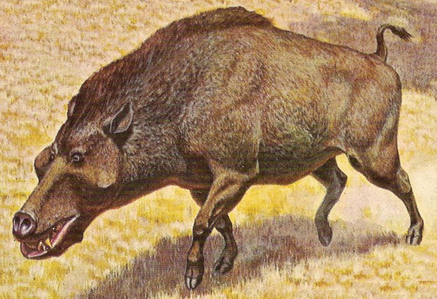Daeodon shoshonensis, Jay Matternes, Domaine public, via Wikimedia Commons