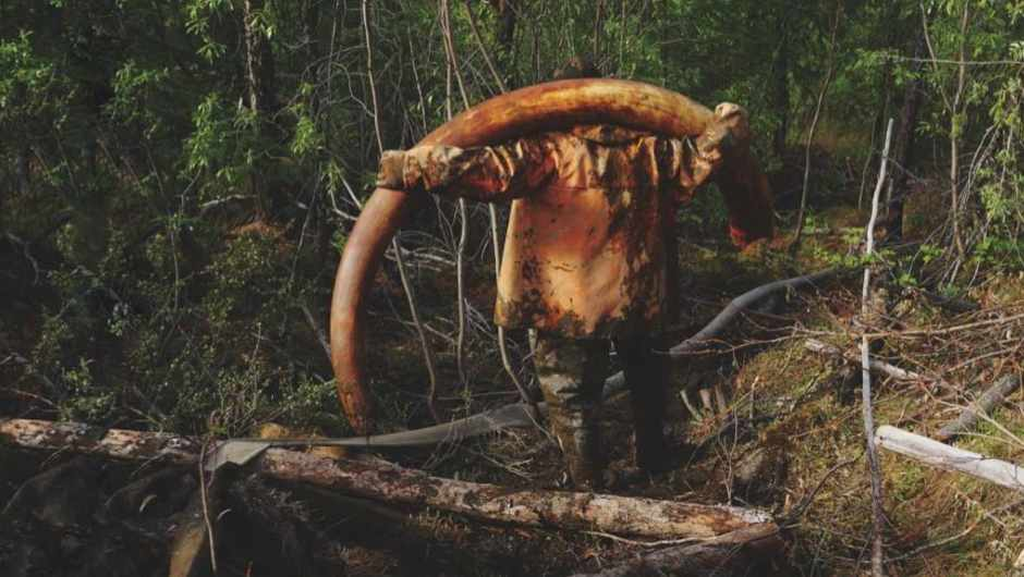 Who are the men hunting for rare mammoth tusks in Russia
