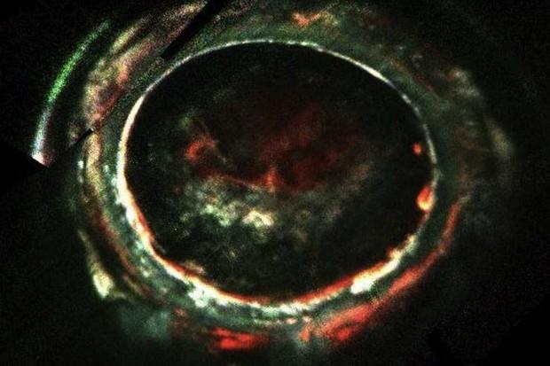 Jovian aurora © NASA/JPL-Caltech/SwRI
