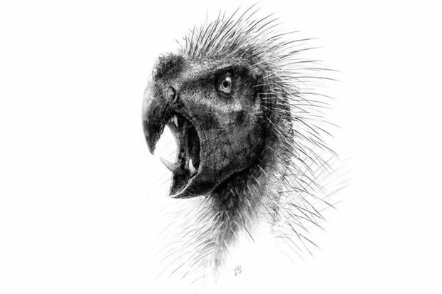 Pegomastax by Todd Marshall - Press release (WebCite copy) ofSereno PC (2012) Taxonomy, morphology, masticatory function and phylogeny of heterodontosaurid dinosaurs. ZooKeys 226: 1-225. doi:10.3897/zookeys.226.2840., CC BY 3.0, Link