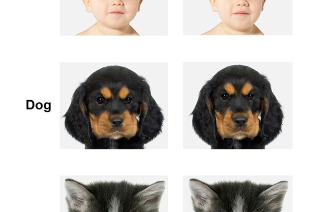 Ability to recognise cute faces hardwired from the age of three © University of Lincoln