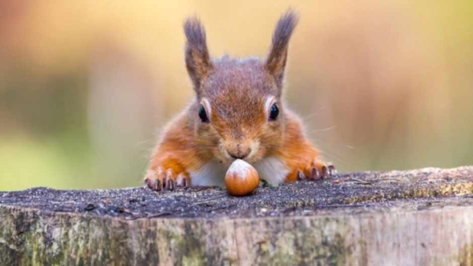 Can other animals plan ahead? © iStock