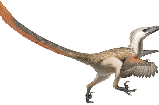 A Velociraptor can't be resurrected in a chicken egg. Fred Wierum/Wikimedia, CC BY
