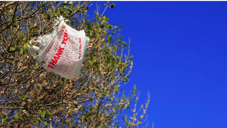 How long do biodegradable bags take to decompose? © iStock