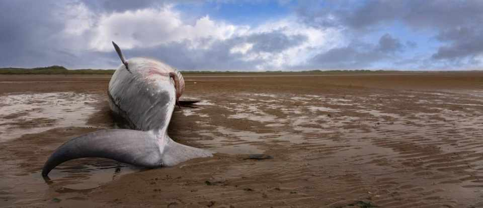 Why do beached whales die so often? © iStock