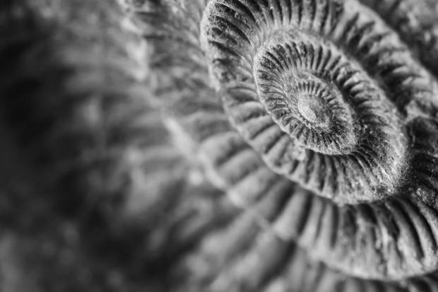 Could ammonites swim? © iStock