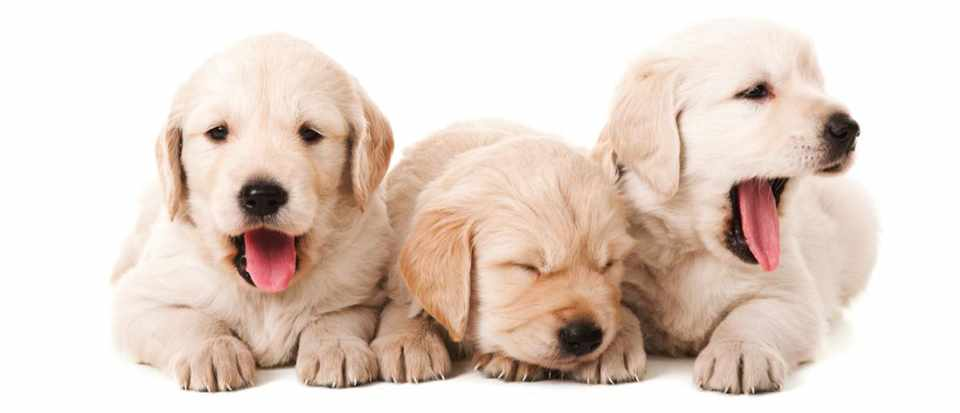 Why are yawns infectious? © iStock