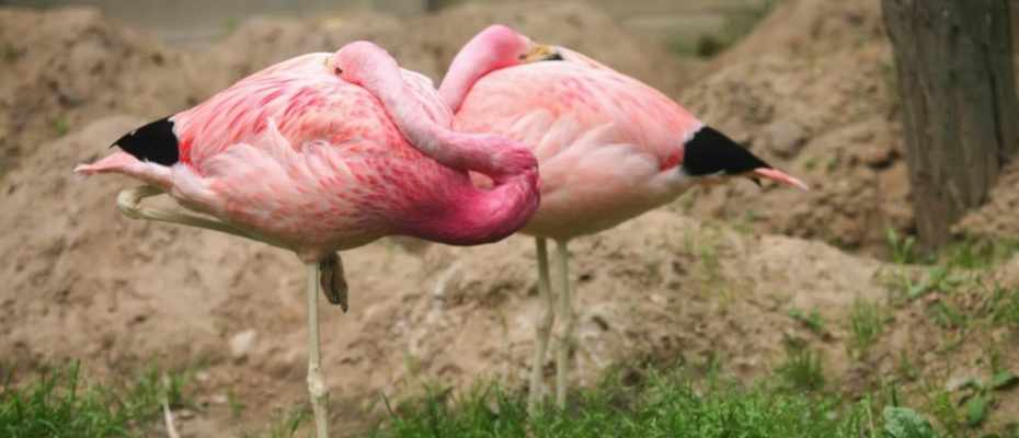 how many animals can sleep standing up science focus bbc focus