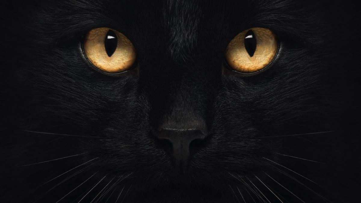 Why can't cats drink milk? Plus 6 other feline myths © iStock