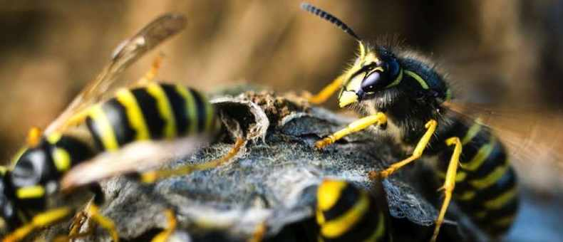 Nine wasp facts that'll get you buzzing about them © iStock